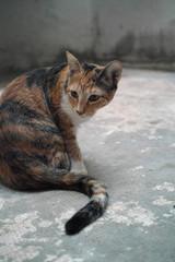 Gato doméstico en patio interior