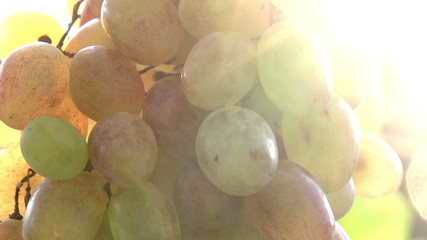 Sun in Bunches of Grapes
