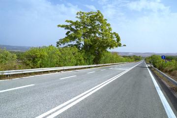 Strada con albero