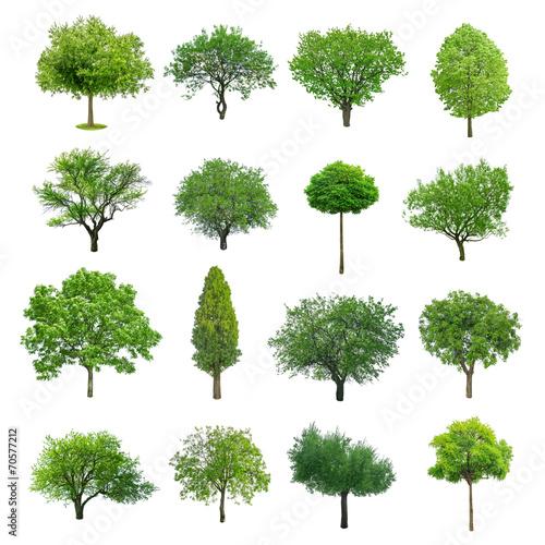 Fotobehang Bomen tree