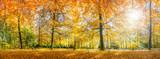 Fototapety Herbstwald Panorama