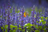Insect and flower garden