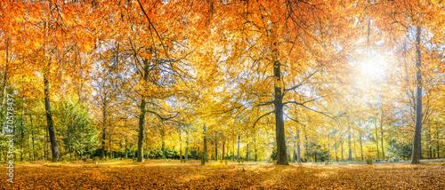 Keuken foto achterwand Bossen Herbstwald