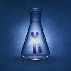 Human chromosome in laboratory flask,Genetics