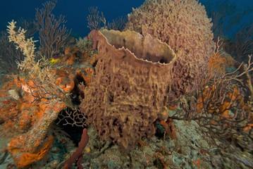 Sea Sponges at Key Largo