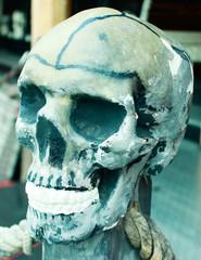 Totenkopf Nachbildung Detail