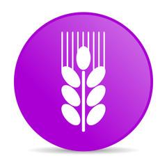 grain web icon