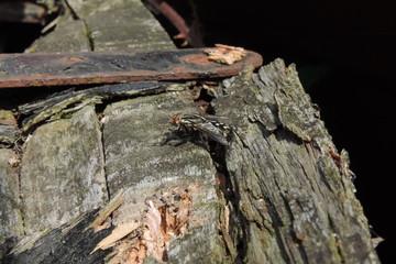 Mouche sur du bois