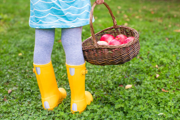 Basket with red apples and yellow rubber boots on little girl