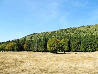 Coniferous forest and meadow  landscape