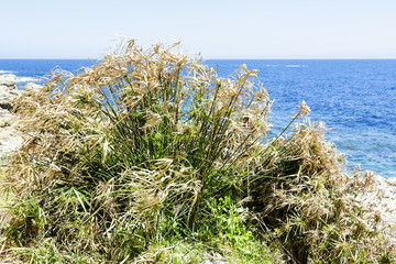 Grass at the coastline