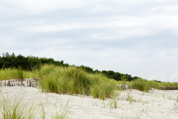 Sandy dune covered with the greenery