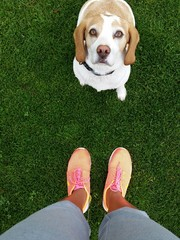 Dog and running shoes