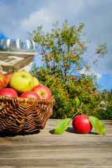 Apfelernte, Tisch mit Äpfeln vor Apfelbaum