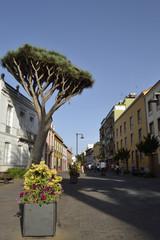 San Augustin street, La Laguna, Tenerife