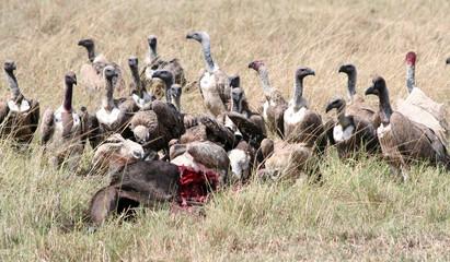 Repas des vautours zoom
