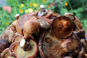 Beautiful and different mushrooms