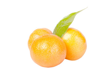 three tangerines with leaves isolated on white background.