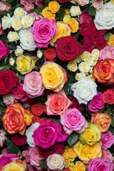 multicolored roses 2