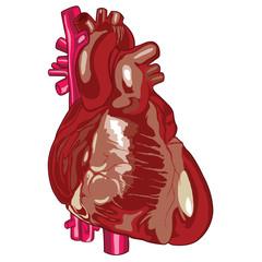 Human Heart 03