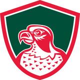 Falcon Head Side Shield Retro
