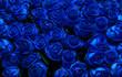 Obrazy na płótnie, fototapety, zdjęcia, fotoobrazy drukowane : blue roses