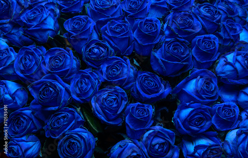 Tuinposter Roses blue roses