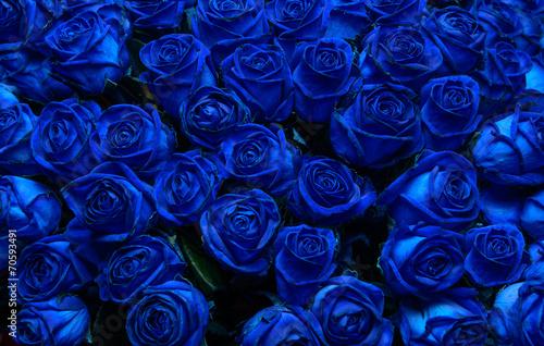 Keuken foto achterwand Roses blue roses