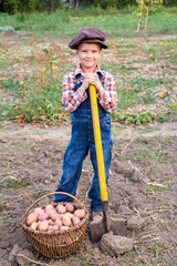 boy harvesting potatoes in garden