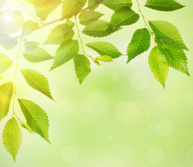Beautiful green twig with leaves on bright background