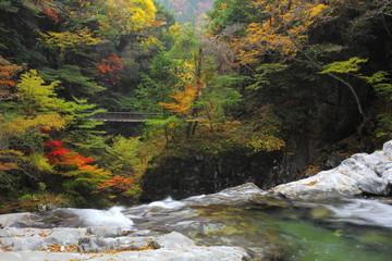 晩秋のみたらい渓谷