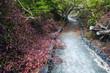 Leinwanddruck Bild - The path on the island of Isabela in the Galapagos, Ecuador