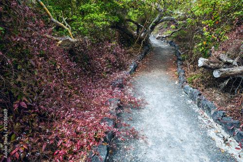 Leinwanddruck Bild The path on the island of Isabela in the Galapagos, Ecuador
