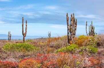 Beautiful Galapagos landscape, Isabela Island