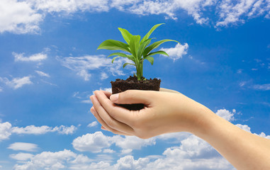 green plant in the hand on blue sky background