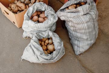 Potatoes in burlap sack on asphalt background