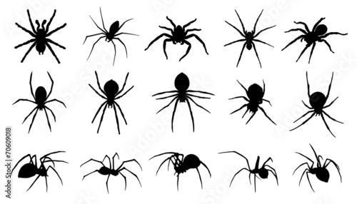 Fototapeta spider silhouettes