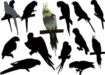 set of isolated parrots