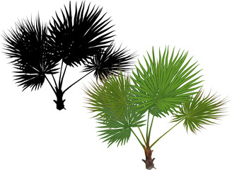 single green palm tree with large leaves