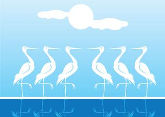 White Water Birds Standing One Leg