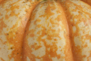 Spotted Pumpkin Closeup