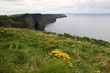 Green grass on the Cliffs of Moher, Ireland