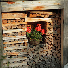 corner with firewood decorated with flowering plant