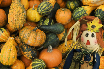Colorful Fall Scene with a variety of Pumpkins