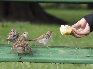Pájaros comiendo de la mano de un niño en Annecy (Francia)