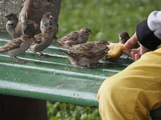 Niño dando de comer a los pájaros en Annecy (Francia)