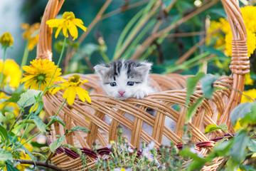 Cute little kitten sitting in a basket on floral lawn