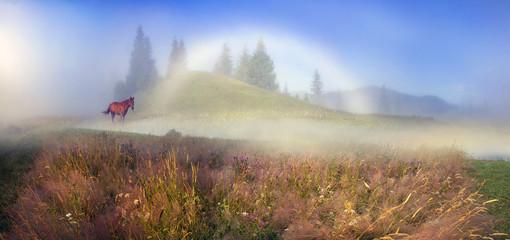 white foggy rainbow