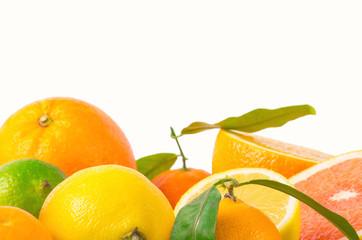 Fruits citrus