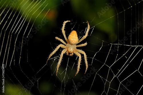 spider web background - 70625605